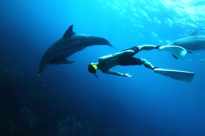 Fukuda & Dolphin