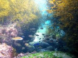 海草と魚たち