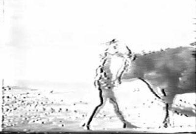 1954年大山倍達の第一撃.jpg