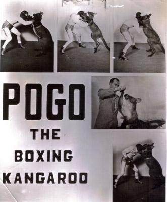 ボクシングカンガルー.jpg