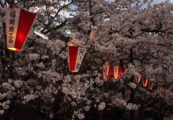 馬見塚公園の桜とボンボリ飾り