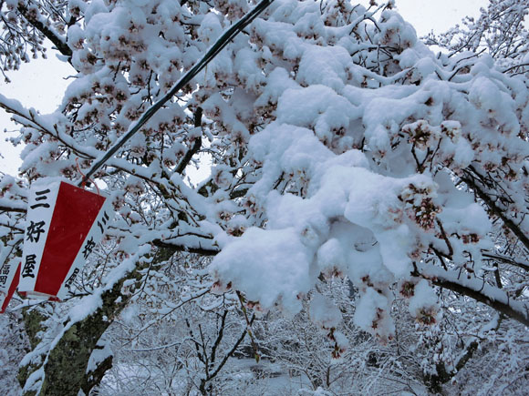 4月10日の馬見塚公園の桜