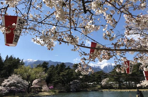 2020年馬見塚公園の桜
