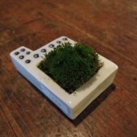 ドウガミスミコ 苔器