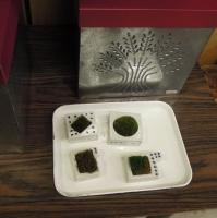 ドウガミスミコ 苔の植木鉢