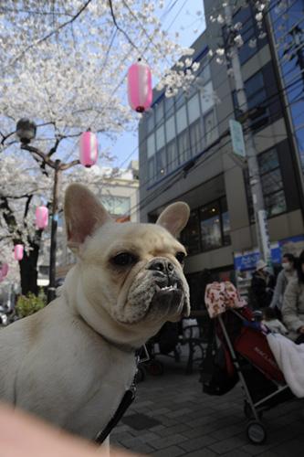 桜とわさび