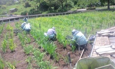雑草を取り除く人たち