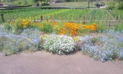 道脇に咲く花