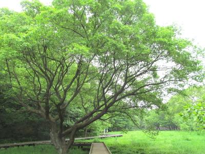 �5月の都立野川公園
