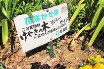 神田川花見ウォーク_5