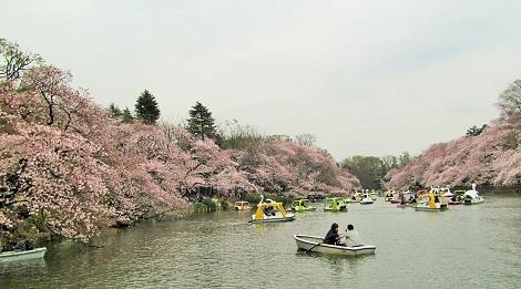春・爛漫2016_1