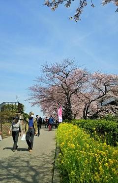 春・爛漫2016_10