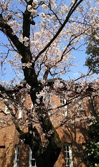 2017年の春うらら_12