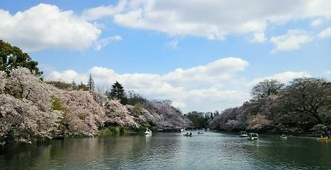 桜ファイナル2017_1