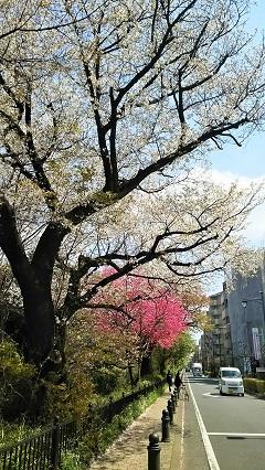 桜ファイナル2017_2