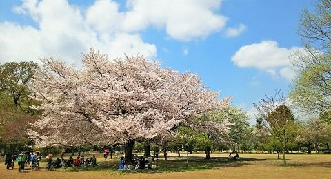 桜ファイナル2017_3