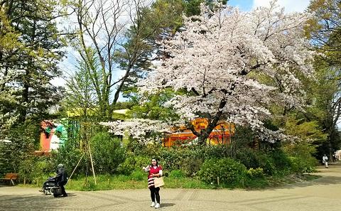 桜ファイナル2017_4