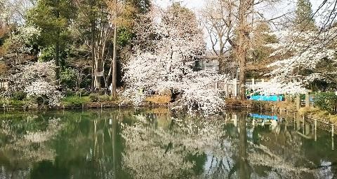 桜の宴2018-1