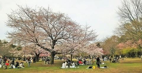 桜の宴2018-3