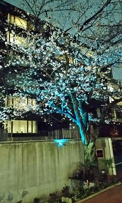 桜の宴2018-4