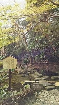 神田川お花見2019_10