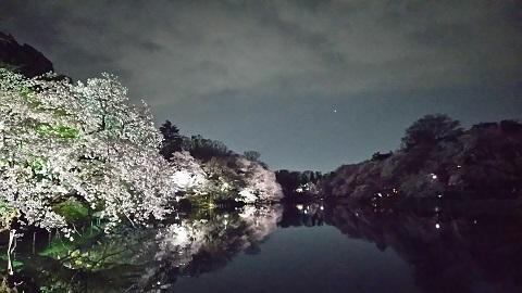 名残りの桜2019_1