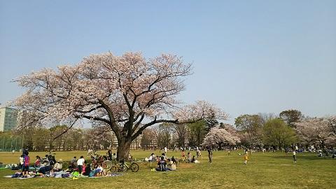 名残りの桜2019_7