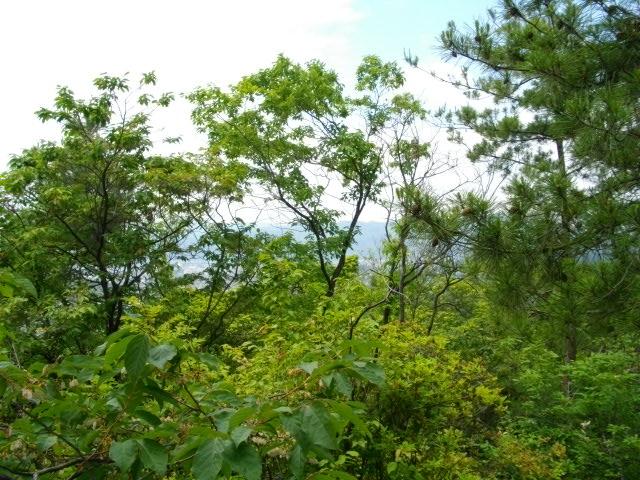 衣笠山10