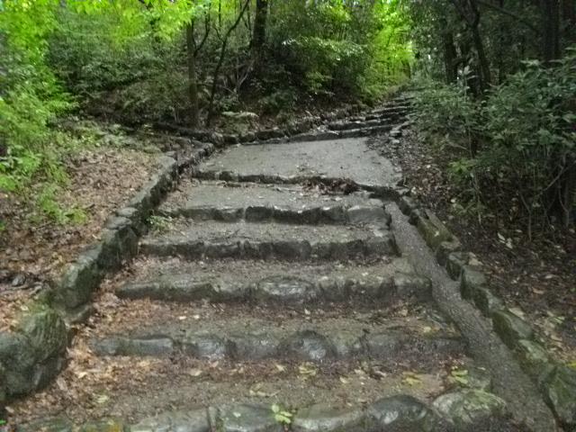 吉田山10