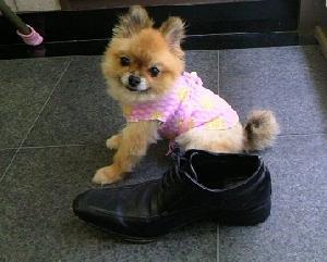 靴とらんかちゃん