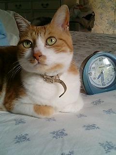 目覚まし時計、進んでるよ。