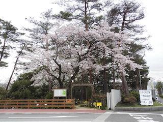 村田製作所 八日市事業所内しゃくなげ園