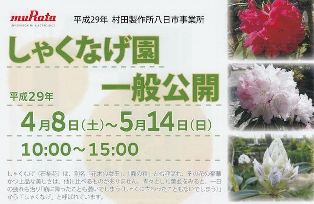 村田製作所八日市事業所しゃくなげ園の一般公開