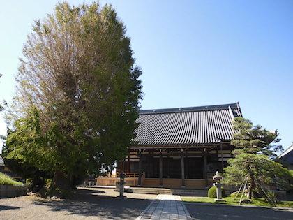 法蔵寺(滋賀県彦根市)本堂とイチョウの木