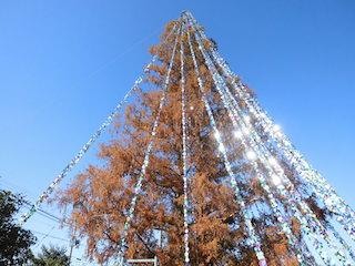 滋賀県守山市の中洲小学校のメタセコイヤのクリスマスツリーがギネス世界記録