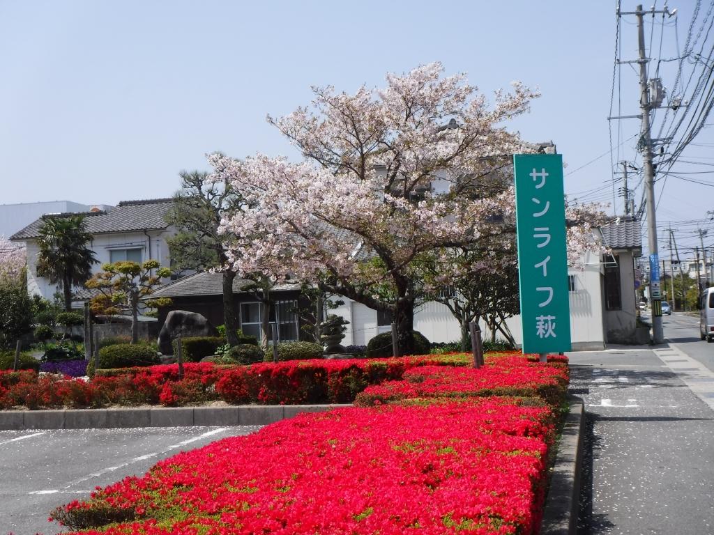 サンライフ桜