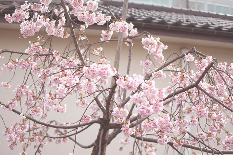 谷中散歩,上野桜木あたり