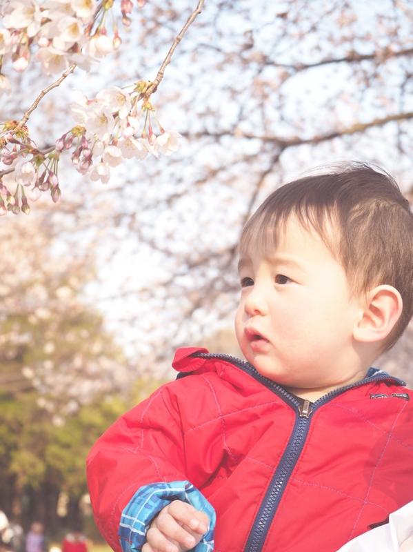 桜,コトバの庭