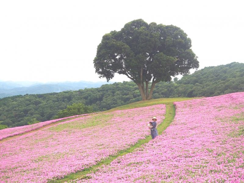 千葉,マザー牧場