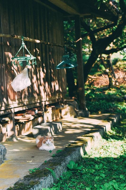 暮らす旅,日本縦断,家族旅,親子旅,子連れ旅行,子連れ旅,日本一周,こありっぷ,本州,キャンプ,食,民芸,民藝,吉田ちかげ,鳥取県,板井原集落,智頭町,廃村