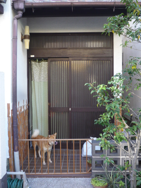 改装前の玄関とうめちゃん