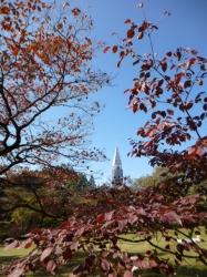 新宿御苑、ハナミズキの紅葉とドコモタワー☆16-11-3