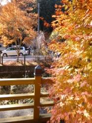 石割神社、階段前の紅葉☆16-11-13