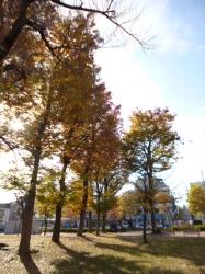 本町公園、日差しと樹木☆16-12-1