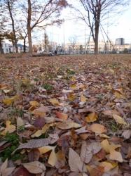 本町公園、枯葉☆16-12-8