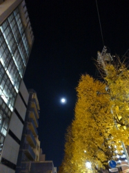 満月とイチョウ☆16-12-14