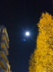 満月、オーブ☆16-12-14