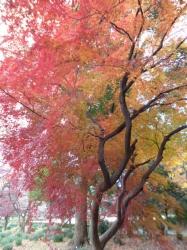 赤と黄色のグラデーション☆16-12-13