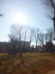 本町公園、太陽と木々☆17-1-22