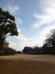 新宿御苑、新宿門すぐ☆17-3-1